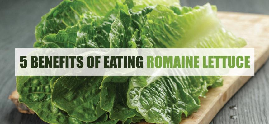 5 BENEFITS OF EATING ROMAINE LETTUCE
