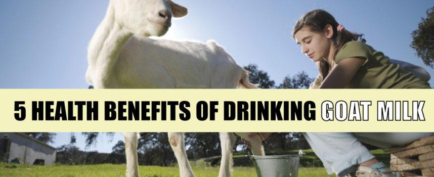 5 HEALTH BENEFITS OF DRINKING GOAT MILK